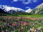 Family visa to New Zealand